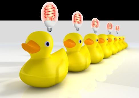 Ducks bulb